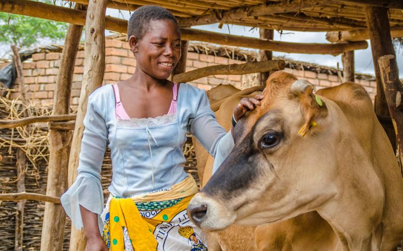 Charity 2019 Heifer Tafika Malawi